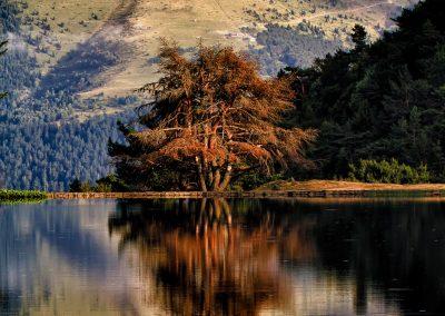 Valle de Arán, Vielha