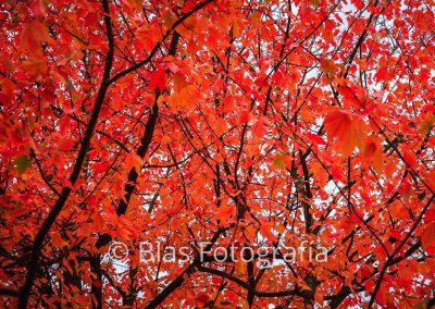 otoño en Vancouver