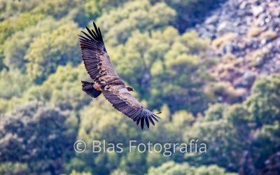 Fotografía de aves en vuelo