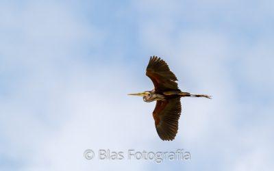 Distancia focal para iniciarse en fotografía de fauna