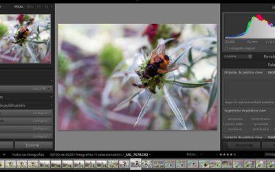 Captura de imágenes con cámara conectada al equipo