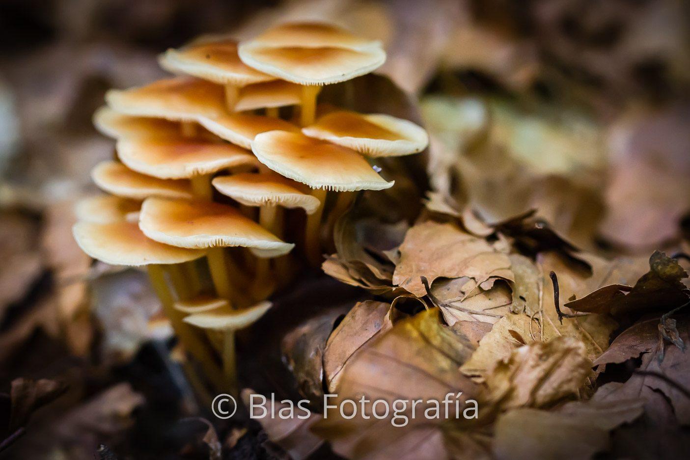 Hojas y hongos