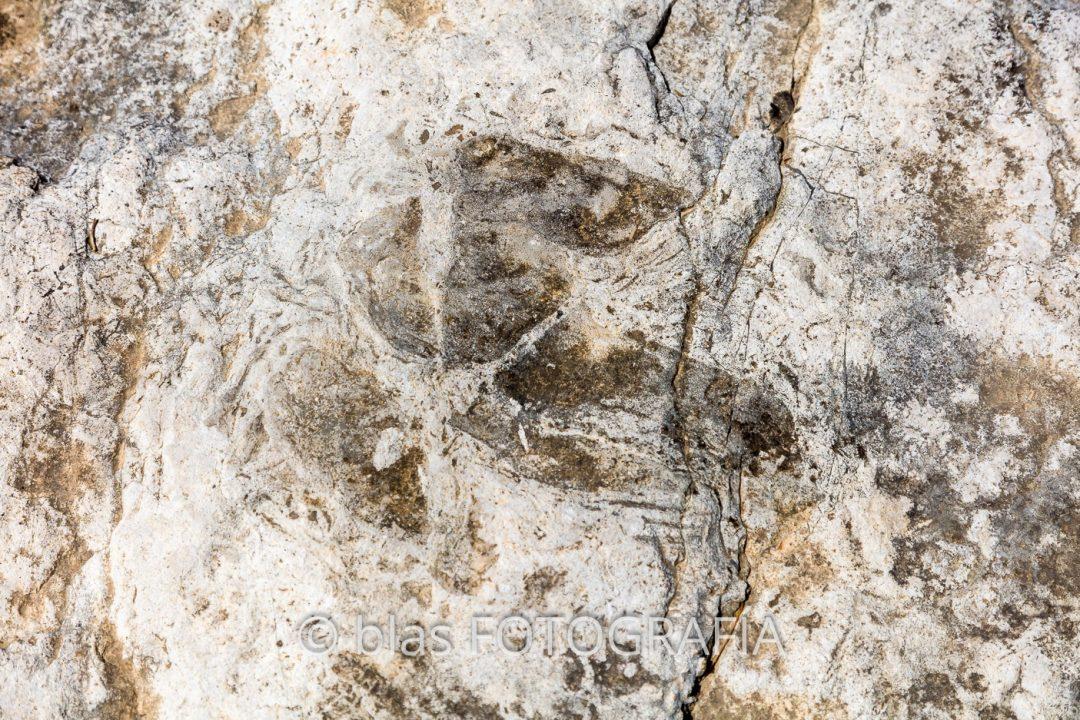 Icnitas (huellas de pisadas) de dinosaurio